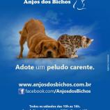 Feira de Adoção de cães e gatos no Tamboré, neste sábado