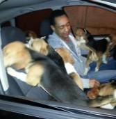 """Caso """"Beagles – Royal"""" – links da Folha de São Paulo"""