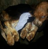 Bom Dia Brasil também divulga invasão ao Instituto Royal para resgate de 200 cães