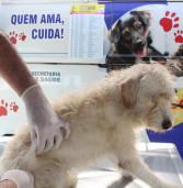 Prefeitura de Barueri promoverá '1º Dia Animal – Adote um Amigo'