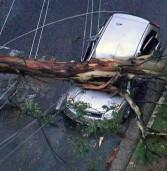 Arvore cai com temporal em Alphaville, sobre carro e rede eletrica, deixando um ferido