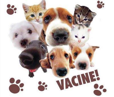 vacina_animal