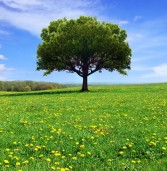 """Editorial – por Gláucia Poppe: """"Alphaville, o bairro de alamedas sem árvores!"""""""