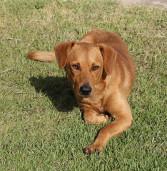 Santana de Parnaíba promove Programa de Castração de Cães e Gatos. Saiba mais.