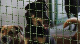 Amor não tem idade: cães adultos precisam ser adotados em Barueri
