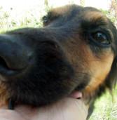 Barueri avança na proteção de animais