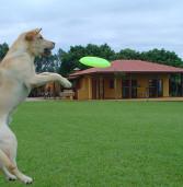 Vai viajar no Carnaval e não tem onde deixar o seu cão? Deixe hospedado no Clube de Cãompo, em Itú.