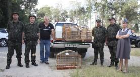 Ação conjunta entre Sema, Ibama, DeFau e PM Ambiental devolveu 12 aves à natureza