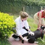 Campanha de vacinação para cães e gatos continua em setembro: 15/09 – Shopping Flamingo em Alphaville