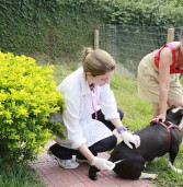 Santana de Parnaíba: Campanha de vacinação antirrábica começou neste sábado (04/08)