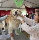 Dia Animal de Barueri lotou o Parque Dom José