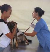 Barueri – Preenchido, agendamento de castração de abril abriu 720 vagas