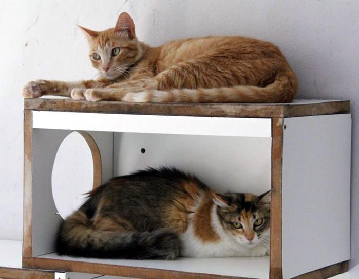 06012021-agendamento-para-castracao-de-caes-e-gatos-comeca-na-quarta-feira-dia-13-0