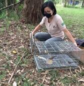 Barueri – Cetas realiza mais uma soltura de aves, desta vez no Parque Ecológico