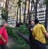 Barueri – Sema realiza quase três mil podas de árvores em um ano